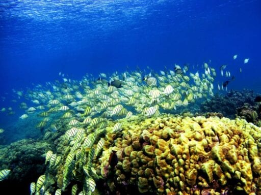 51998444.jpg.0 Hawaii is banning sunscreens that kill coral reefs
