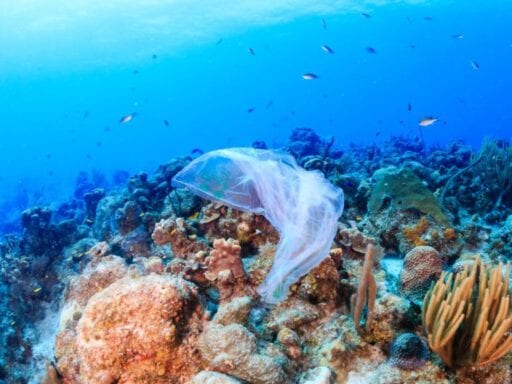 shutterstock_684898093.0 We know ocean plastic is a problem. We can't fix it until we answer these 5 questions.